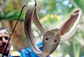 snake_295x200