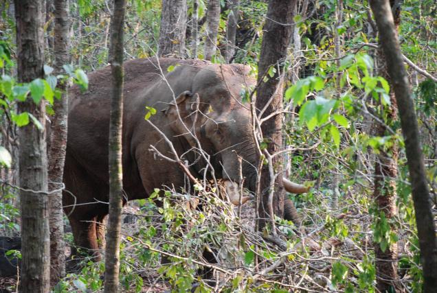 elephant--vote