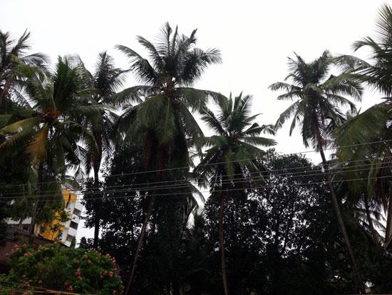Rain_start_mlore_3