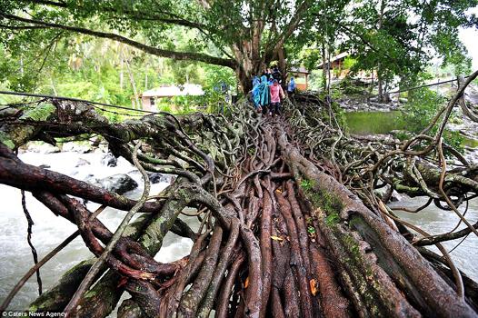 Root Tree -1