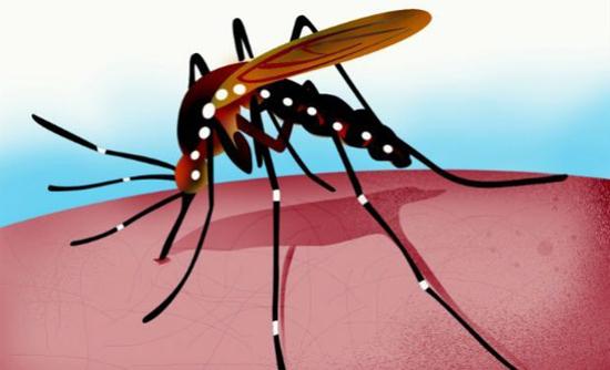 mosquito _0_0_0_0_0