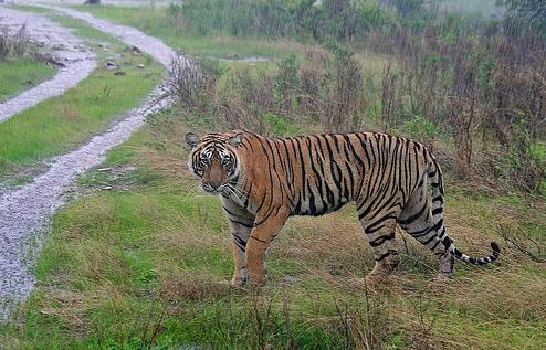 nagarahole-wild-life1