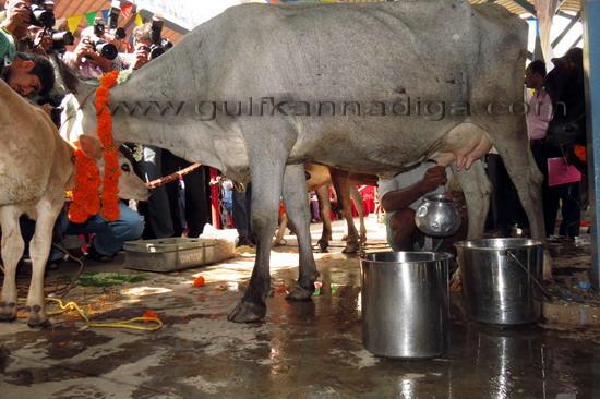 World_Milk_Day_11