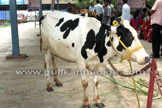 World_Milk_Day_25
