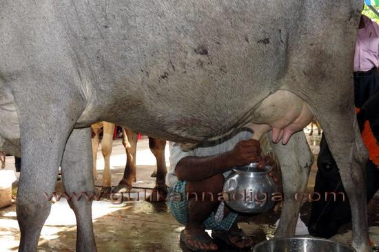 World_Milk_Day_27