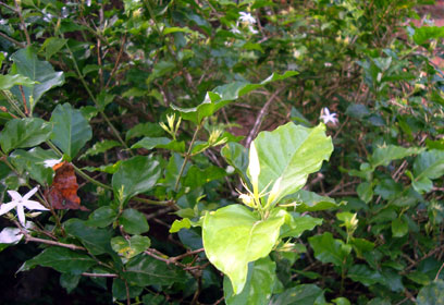 mallige plant-17.06.2013
