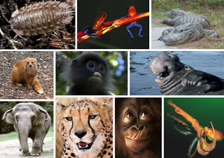 10nfacts of animals