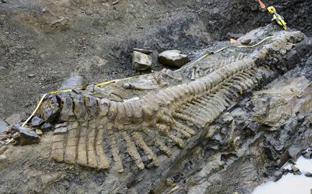 CORRECTION Mexico Dinosaur Tail