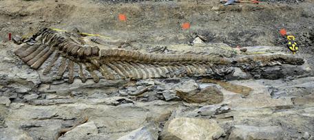 Mexico Dinosaur Tail