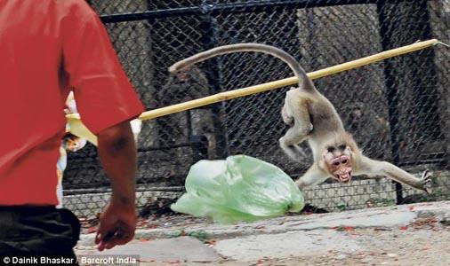 Monkey attacck -3