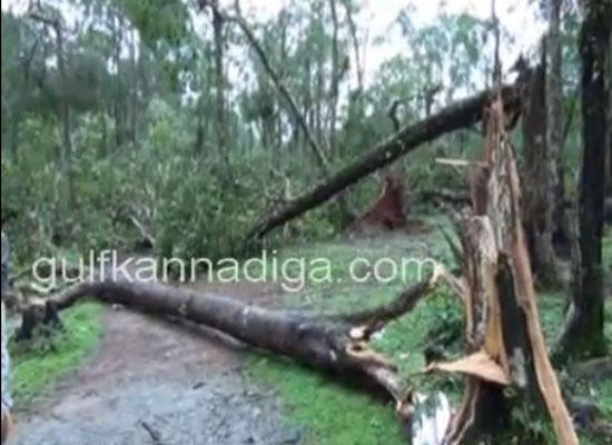 kanajaru_cyclone11