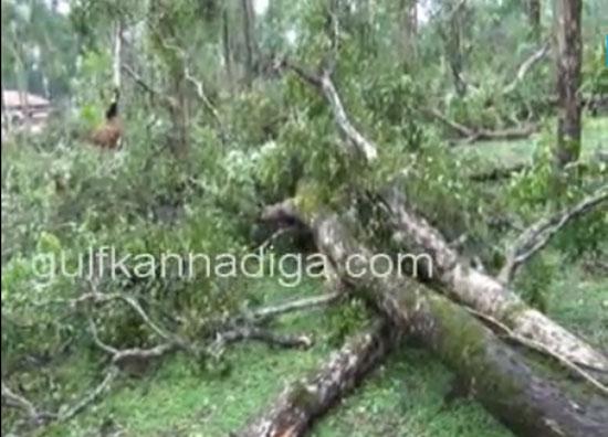 kanajaru_cyclone13