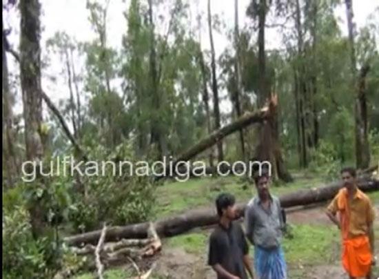 kanajaru_cyclone14