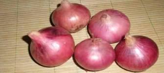 onion_price_daily
