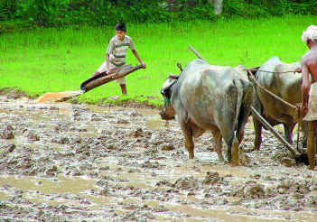 ploughing_field_chickmaglur