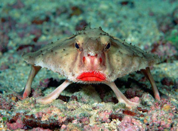 red lipped fish