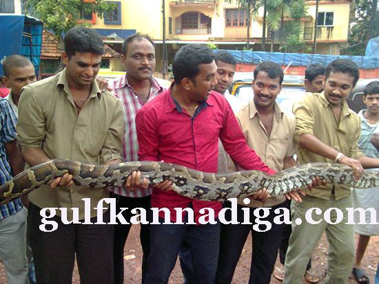 manipal-python3