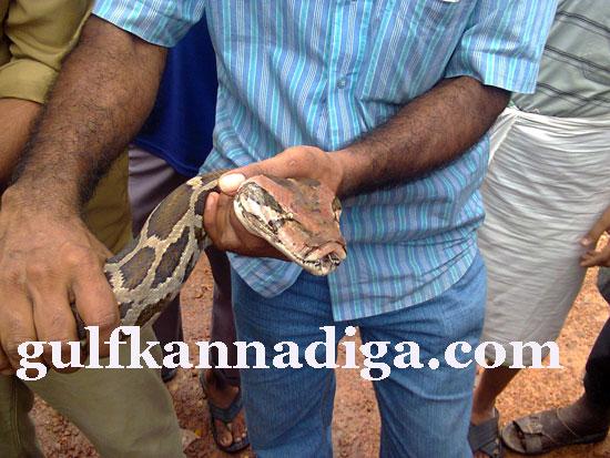 manipal-python5