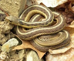 snake_garden_bite
