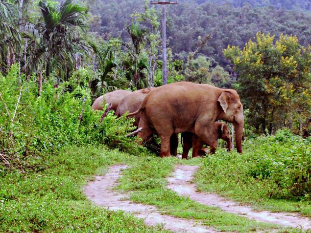 elephant_1703752f