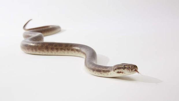 snake_nearhouse_bite
