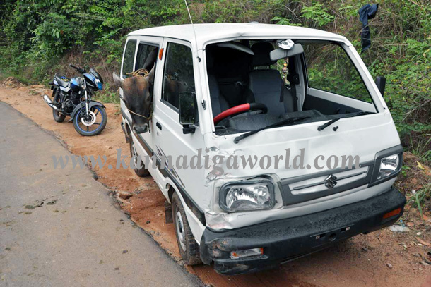 Illigale_Cow_Car_Accident_1