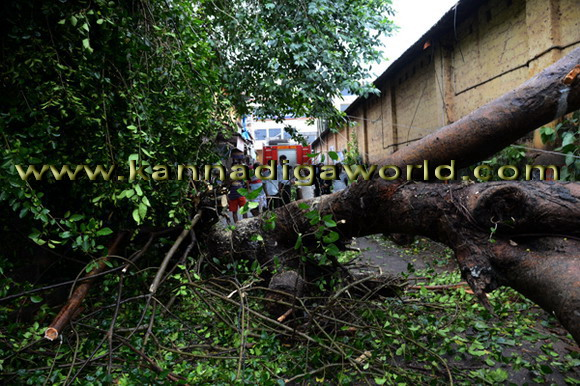 Trees_uprooted_city_7