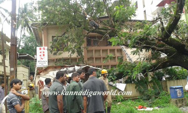 kadri_tree_fell_9