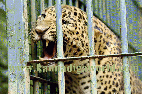 Batwala_Cheeta_cach_