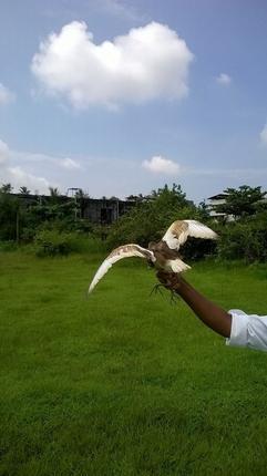 releasing_heron