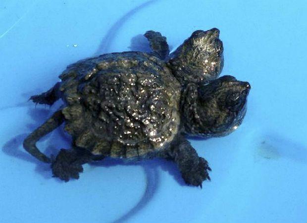 turtle-ap-photo