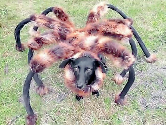 weird-dog