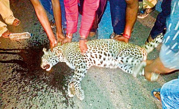 LEOPARD_death_accident