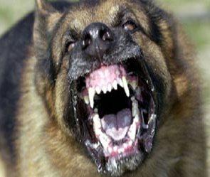 dog_file_photo