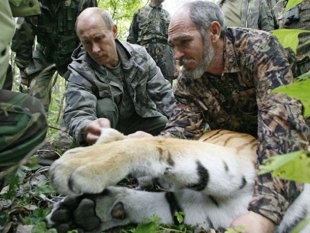 putin-tiger