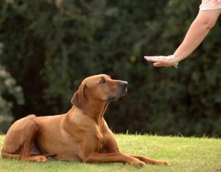 Dogs-Process-Human-Speech-Study