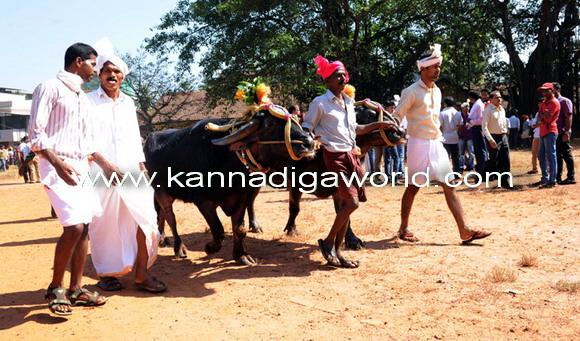 Kambla_protest_photo_12