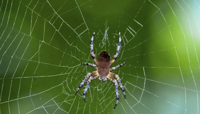 299275-spider-web