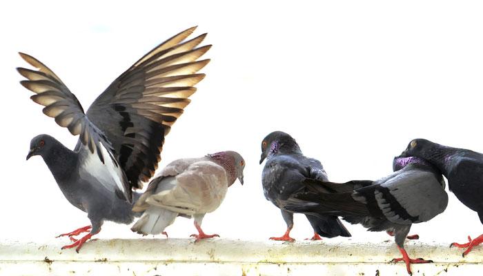 299600-birds