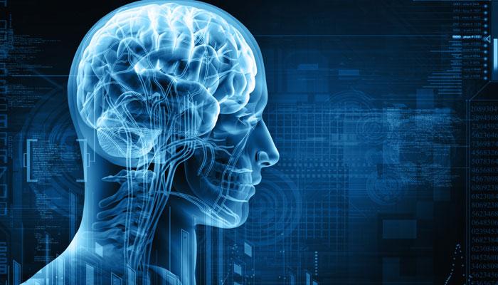 305402-brain-2