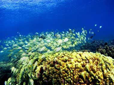 CoralReefs_GettyImages-