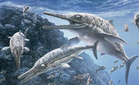 Short-Necked-Marine-Reptile-Fossil
