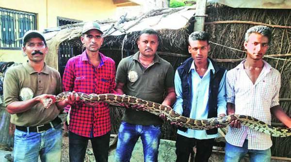 pythonl