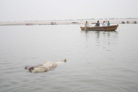 Ganges_dead_body_1