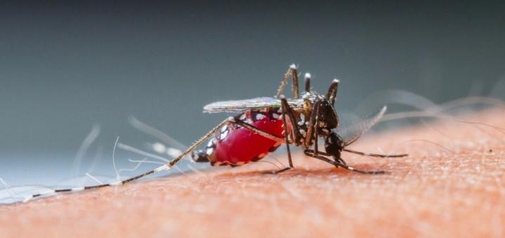 new-malaria-vaccine-100-percent-effective-e1420021339402-719x340