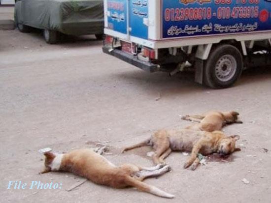 street_dog_kill_photo