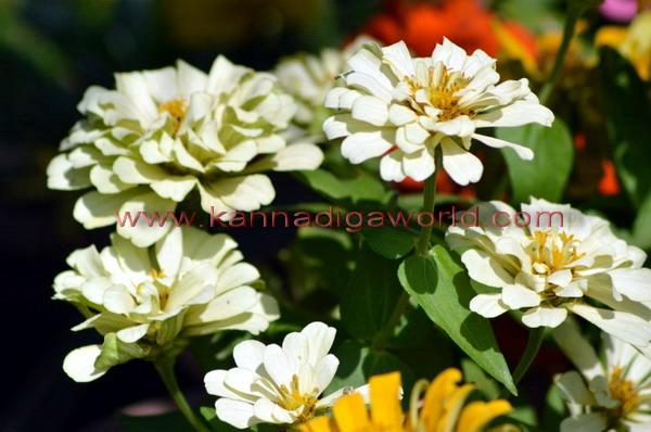 kadri_Flower_show_4