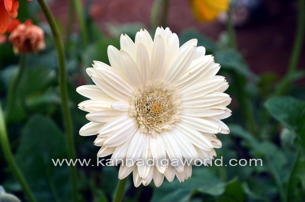 kadri_Flower_show_8