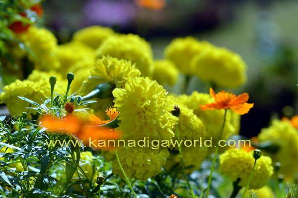 kadri_Flower_show_9