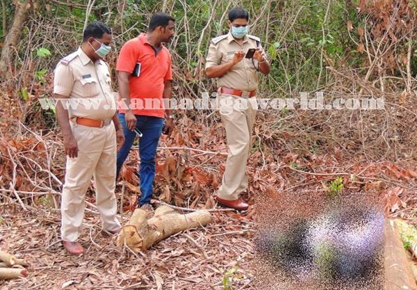 Gangolli- gujjaadi-dead body 011